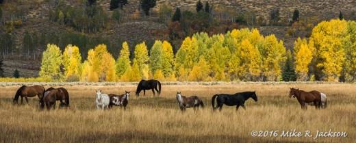 Buffalo Valley Horses
