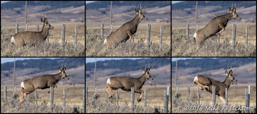 Jumping Buck Sequence