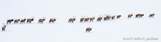 Parade of Elk