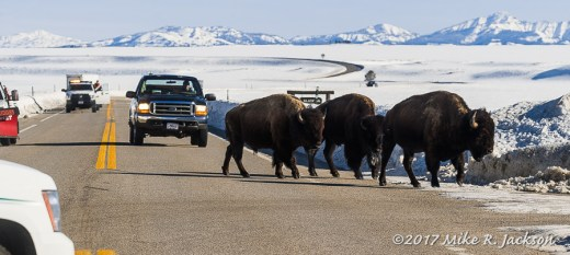 Bison Drive