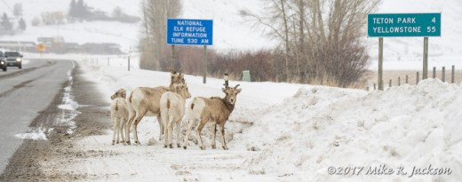 Highway Bighorns