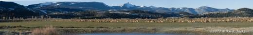 Kelly Elk Herd
