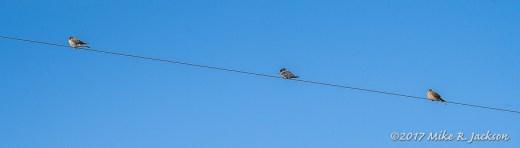 Kestrel, Kingfisher, Kestrel: