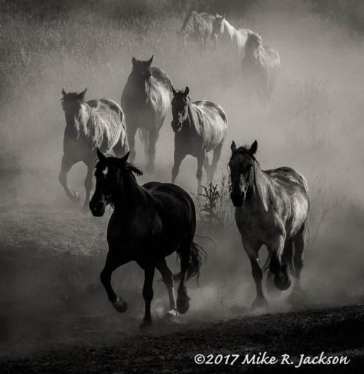 Dusty Horses