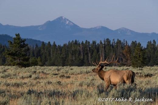 Morning Elk and Jackson Peak