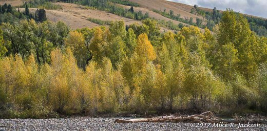 Gros Ventre Willows
