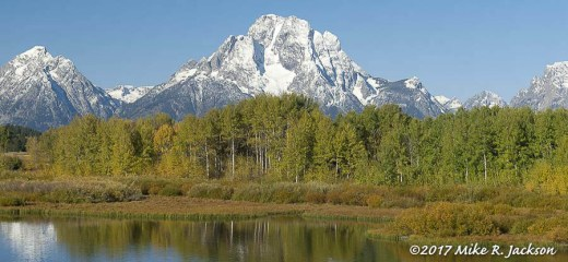 Oxbow Bend Aspens