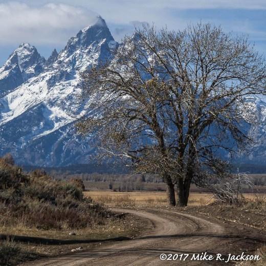 Rural Tree