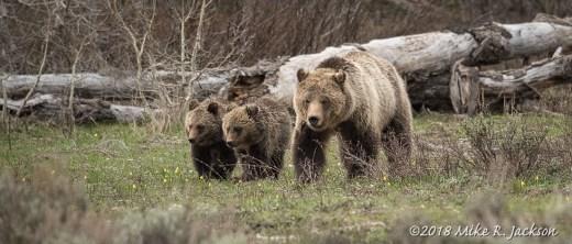 Blondie and Cubs