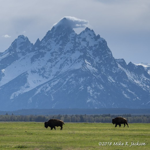 The Grand and Bison