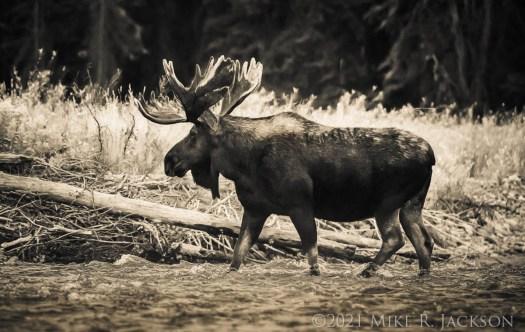 Shoshone Crossing Gros Ventre