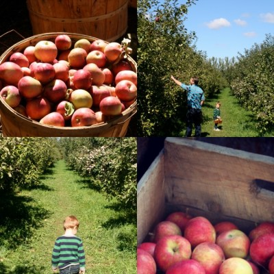 Apple Picking on a Glorious Fall Day in Ottawa