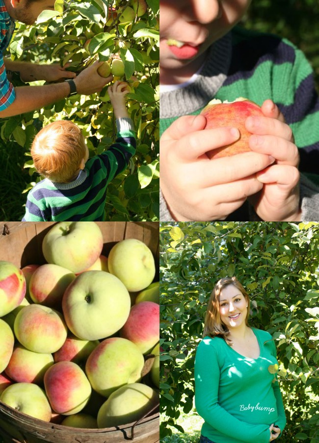 Fall #Apple Picking in #Ottawa www.bestofthislife.com 1