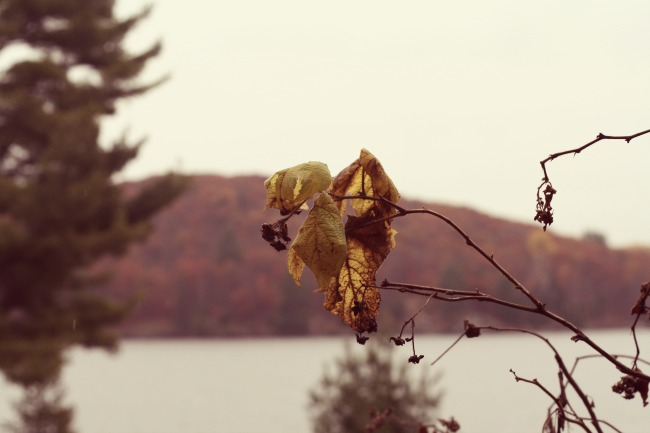 Fall Leaves www.bestofthislife.com