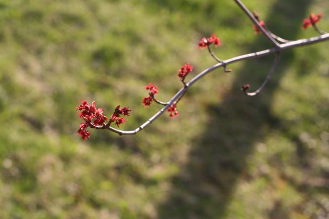 Red flower buds and grass