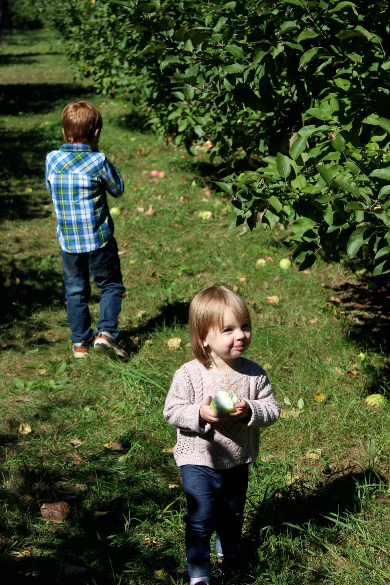 Apple Orchard 2015 10