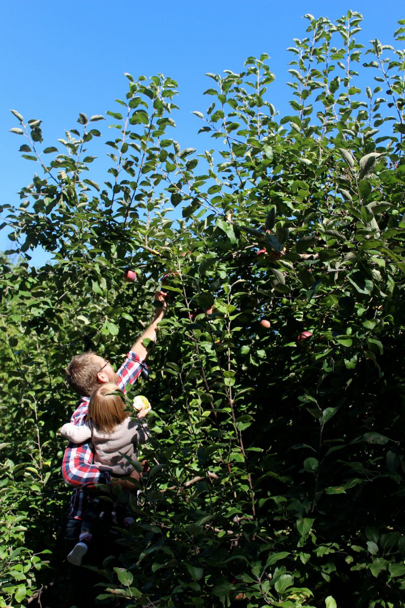 Apple Orchard 2015 8