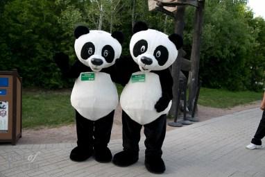 Greetings from the Giant Panda mascots, Er Shun and Da Mao