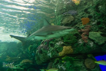 Ripleys-Aquarium-BestofToronto-2013-006