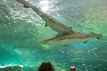 Ripleys-Aquarium-BestofToronto-2013-007