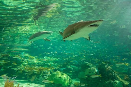 Ripleys-Aquarium-BestofToronto-2013-012