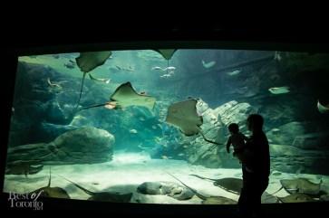 Ripleys-Aquarium-BestofToronto-2013-037