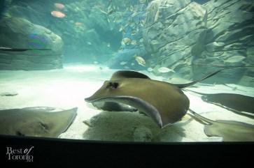 Ripleys-Aquarium-BestofToronto-2013-038