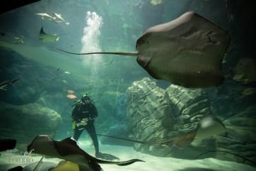 Ripleys-Aquarium-BestofToronto-2013-052