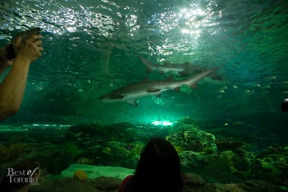 Ripleys-Aquarium-BestofToronto-2013-056