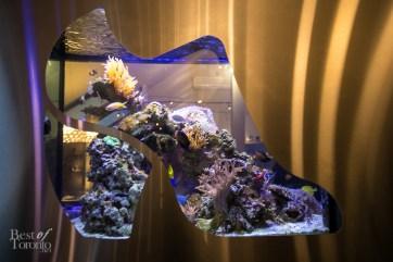 Shoe-shaped Aquarium