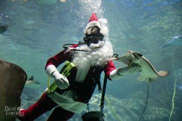 Ripleys-Aquarium-Scuba-Claus-BestofToronto-2013-002