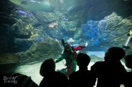 Ripleys-Aquarium-Scuba-Claus-BestofToronto-2013-010
