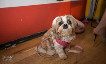 Paws-for-the-Cause-BestofToronto-2014-003