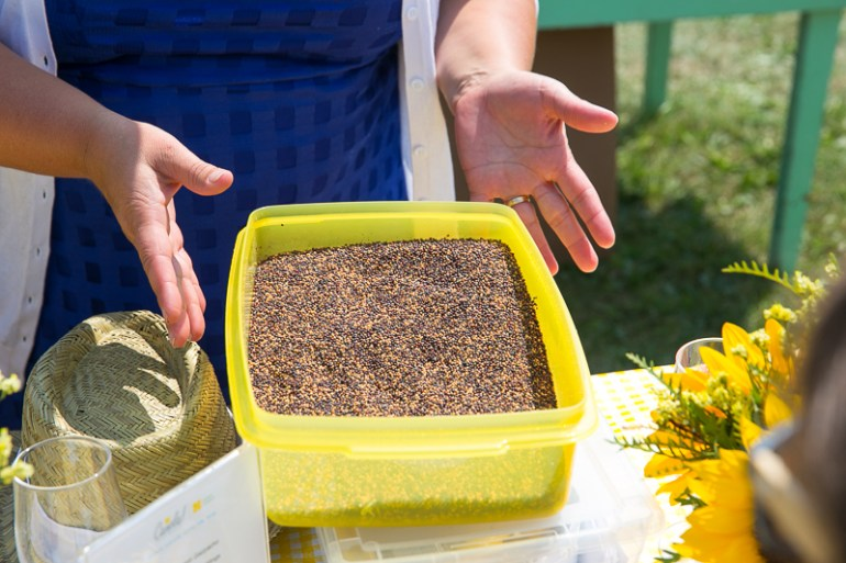 A box of canola seeds ready for testing