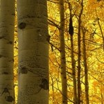 Introduction to Forestry, Forest Policy and Economics – A Free Course