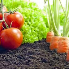 Alison Growing Organic Food