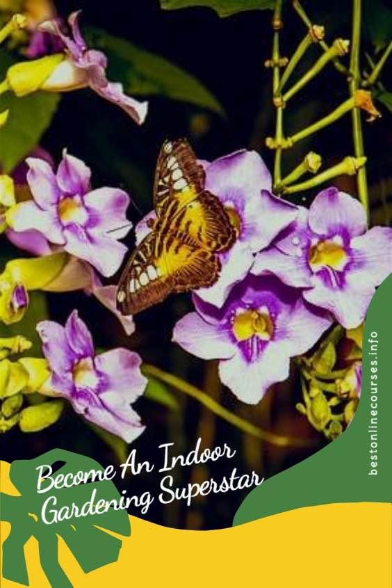 Become-An-Indoor-Gardening-Superstar 1