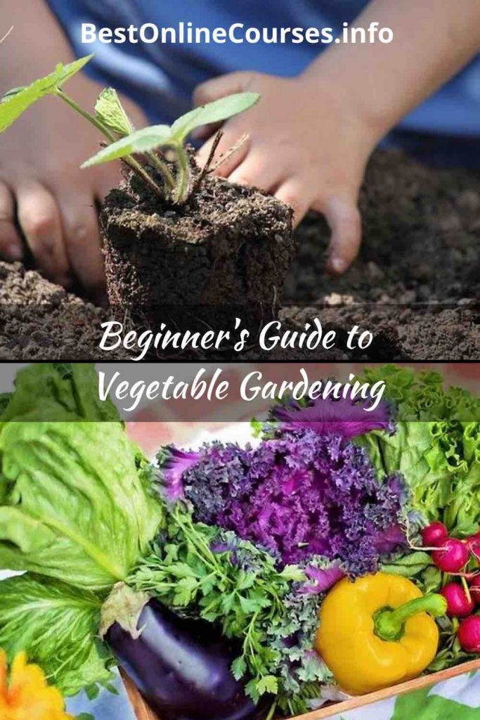 Beginner Guide to Vegetable Gardening