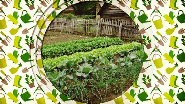 Beginner's Guide to Vegetable Gardening