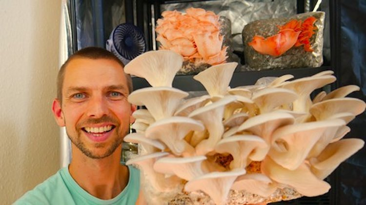 Growing Mushrooms Indoors for Business and Pleasure