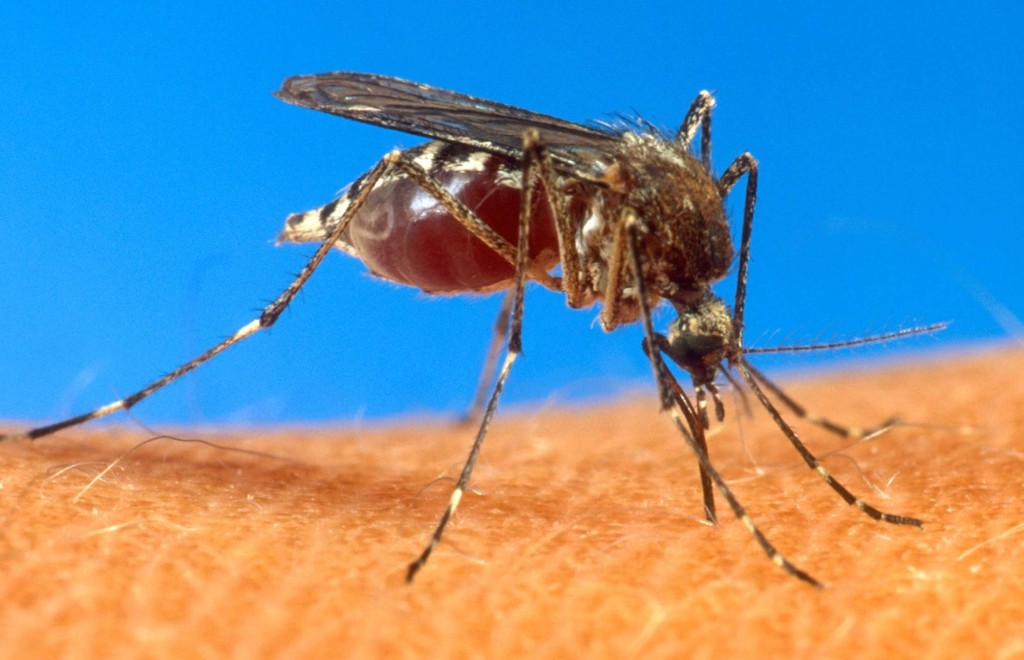 7-Infected-Mosquitos-in-Towns