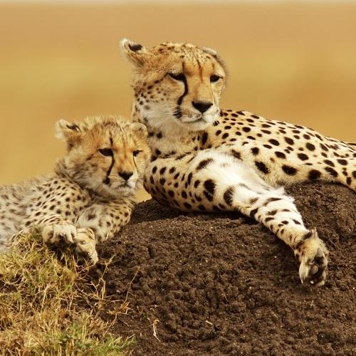Best Safaris | African Safari Tours | We Know Africa Best