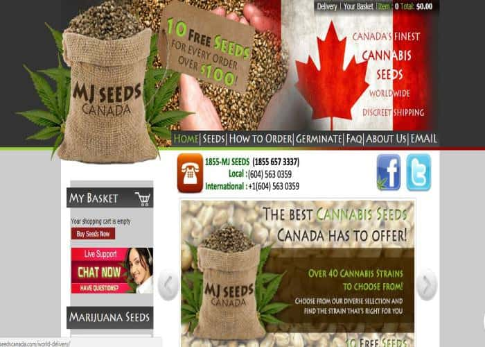 MJ Seeds Canada Review