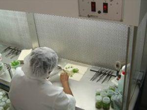 plant-tissue-culture-laboratory