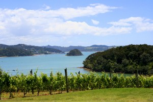 Vineyard near Russell  BAY OF ISLANDS PRIVATE TOUR WITH THE WINE TASTING 05 IMG 4818 300x200