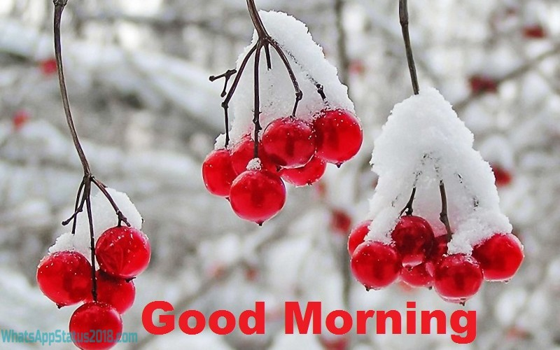 Beautiful Good Morning Images With Quotes | Good Morning Wallpaper | Good Morning Photos