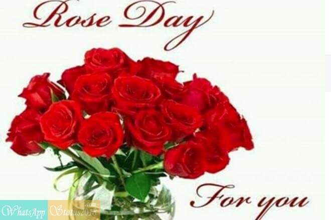 Happy Rose Day images, Beautiful flowers