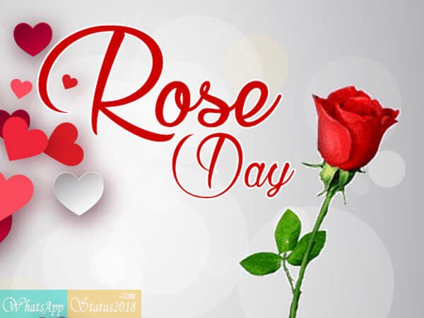 Happy Rose Day images, Beautiful flowers, Rose Day Images