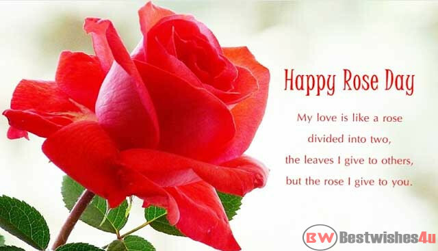 Rose Day Shayari In Hindi 2021, Rose Day Wishes, Rose Day Quotes, Rose Day Messages