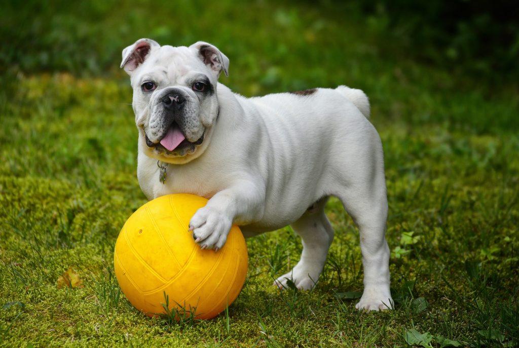 Collari antipulci per cani: come e quando utilizzarli